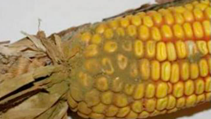 Nutrição Animal - Agroceres Multimix