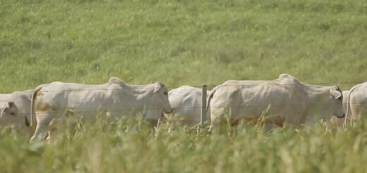 Manejo da Pastagem - Nutrição Animal - Agroceres Multimix