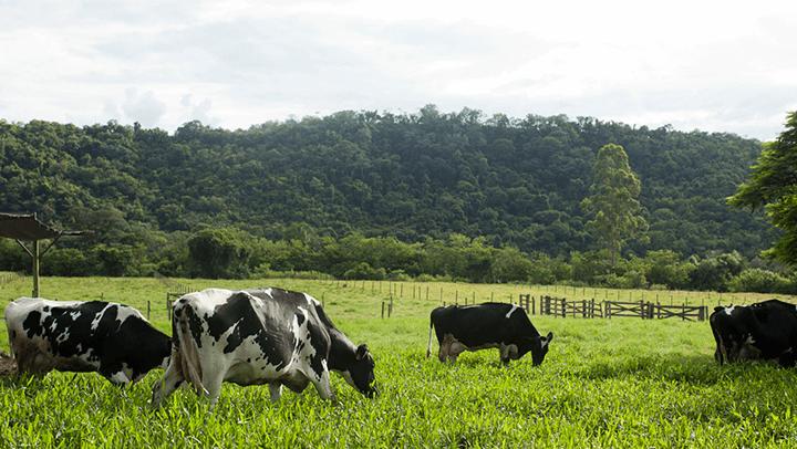 estresse térmico em gado leiteiro