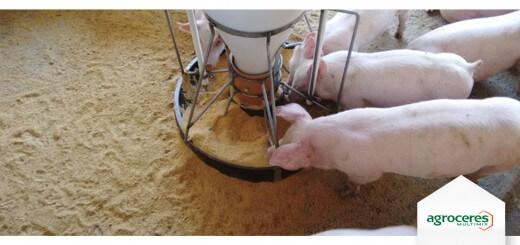 Comedouro - Nutrição Animal - Agroceres Multimix