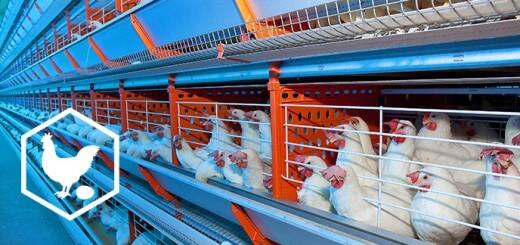 Biosseguridade - Nutrição Animal - Agroceres Multimix