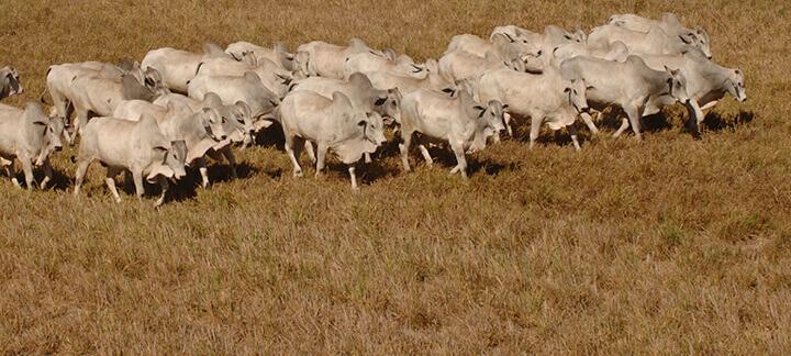 Período da seca - Nutrição Animal | Agroceres Multimix