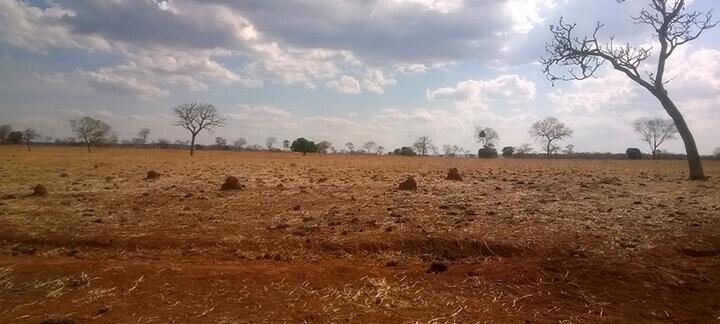 Massa de forragem - Nutrição Animal | Agroceres Multimix