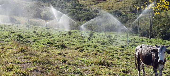Dejetos na suinocultura - Agroceres Multimix | Nutrição Animal