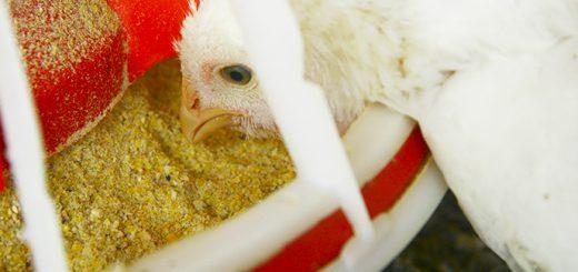 Artigo: Redução de Custo. Uma ave se alimentando.