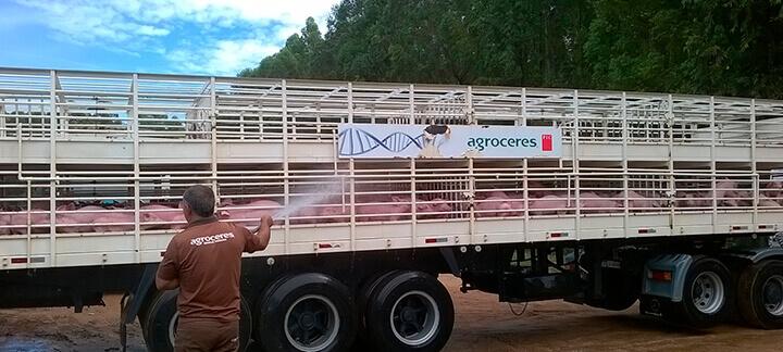 Transporte de Suínos | Agroceres Multimix - Nutrição Animal