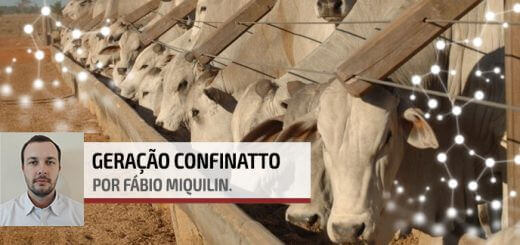 Lucro no Confinamento | Agroceres Multimix - Nutrição Animal