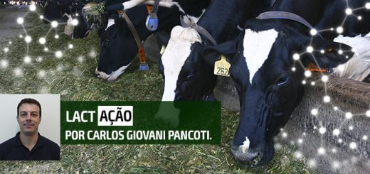 Vacas em Lactação | Agroceres Multimix - Nutrição Animal