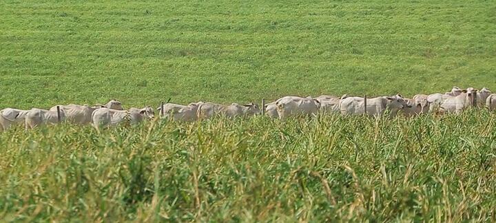 Taxa de Lotação   Nutrição Animal - Agroceres Multimix