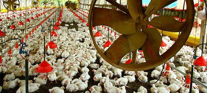 Post Vazio Sanitário - Agroceres Multimix Nutrição Animal