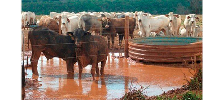 Post: Fornecimento de Água - Bebedouro com más condições de acesso.