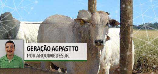 Terminação Intensiva a Pasto - Nutrição Animal Agroceres Multimix