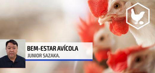 Bicagem - Nutrição Animal Agroceres Multimix