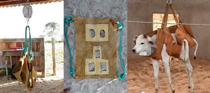 Nascimento - Agroceres Multimix Nutrição Animal
