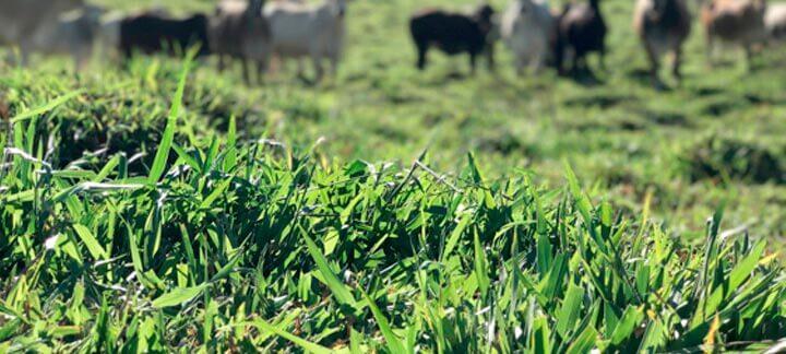 Sequestro - Agroceres Multimix Nutrição Animal