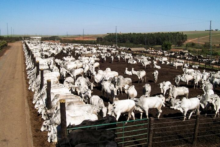 Formação de lotes - Nutrição Animal Agroceres Multimix