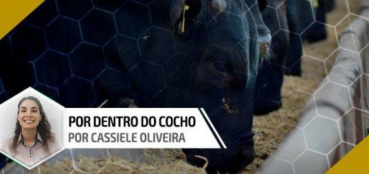 Uso de gordura na dieta - Por Dentro do Cocho | Nutrição Animal