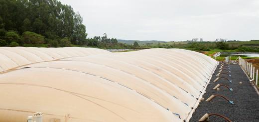 biodigestores na suinocultura - Nutrição Animal - Agroceres Multimix