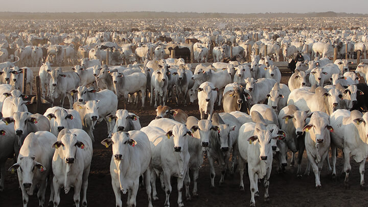 Polpa Cítrica - Nutrição Animal - Agroceres Multimix