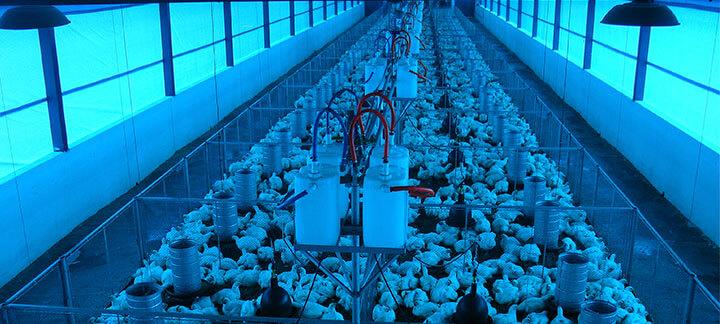 Programa de Estágio - Nutrição Animal - Agroceres Multimix