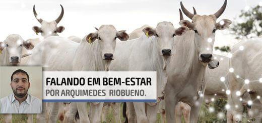 Desmama de Bezerros | Agroceres Multimix - Nutrição Animal