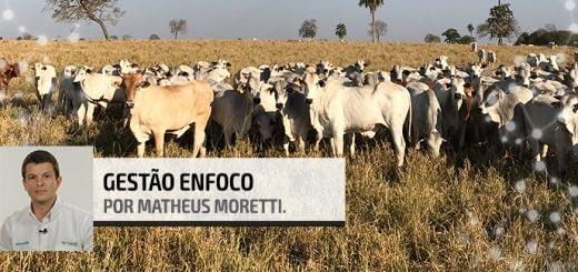 Post Ganho Compensatório - Agroceres Multimix Nutrição Animal