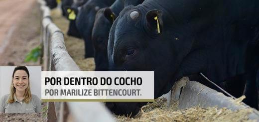 Aditivos | Nutrição Animal - Agroceres Multimix