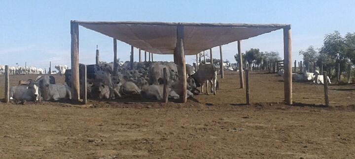 Sombra - Nutrição Animal   Agroceres Multimix