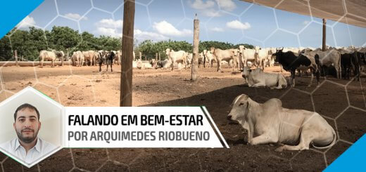 Sombra - Nutrição Animal | Agroceres Multimix