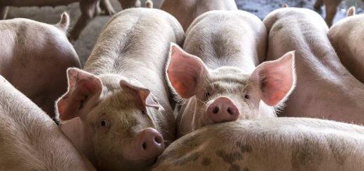 Lotação o revés da evolução | Nutrição Animal Agroceres Multimix
