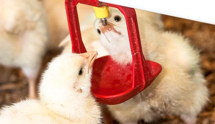 Antibióticos Promotores de Crescimento - Nutri&Aves
