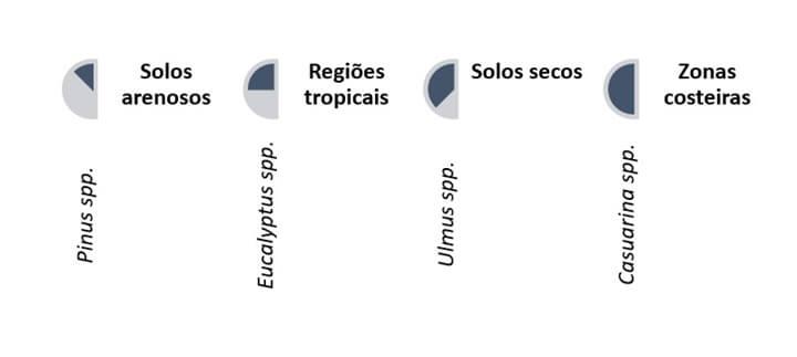 A imagem mostra alguns tipos de arvores e seus tipos de solos, sendo eles: Pinus spp solos arenosos, Eucalyptus ssp regiões tropicais, Ulmus spp solos secos, Casuarina ssp zonas costeiras.
